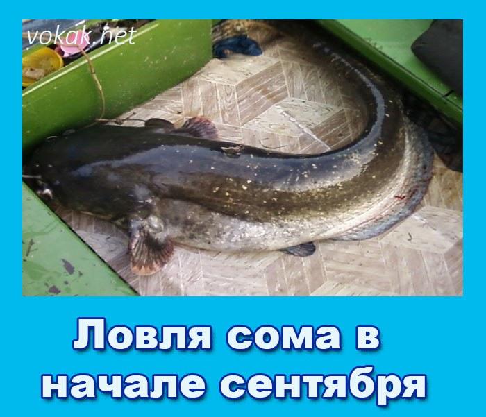 прикормка для сома русская рыбалка 3