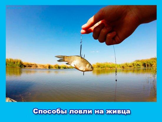 рыбалка способы ловли на живца
